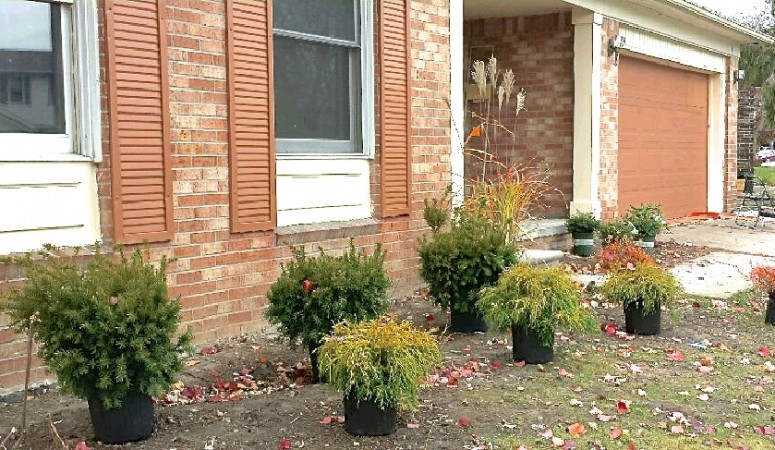 Curb Appeal with Landscape Staging